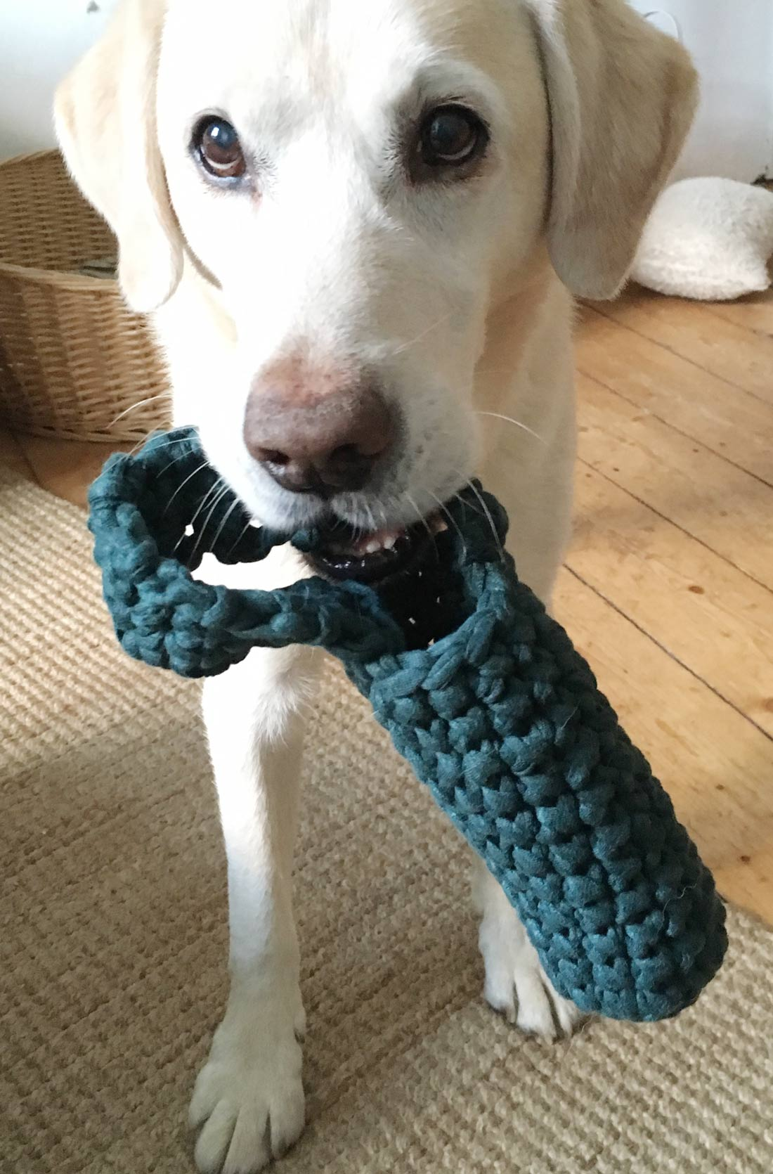Hundespielzeug und Lou 2