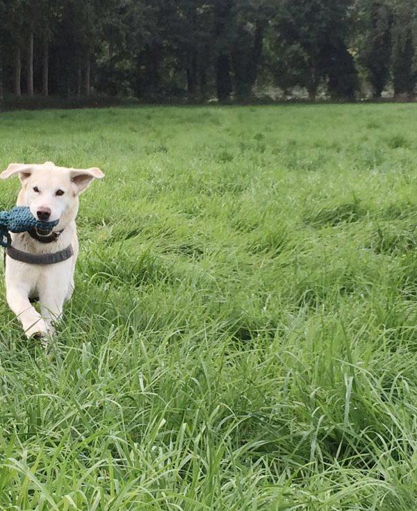 Häkelanleitung für unkaputtbares Hundespielzeug
