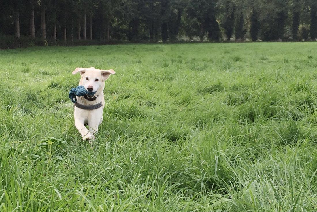 Häkelanleitung Für Ein Unkaputtbares Hundespielzeug Gebluemlich